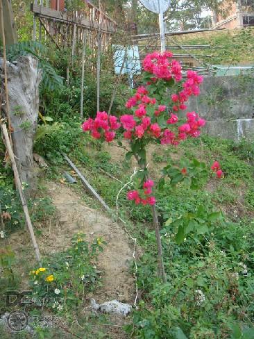 20081118_CheChu_075Photo.jpg