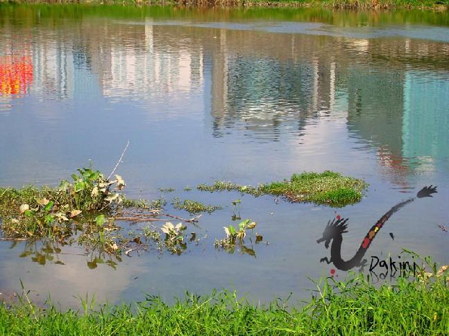 水中倒影,怎麼有點髒的感覺.JPG