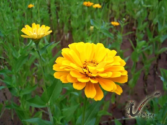 2008-09-09孔明車迎風觀山成美河濱公園2.JPG